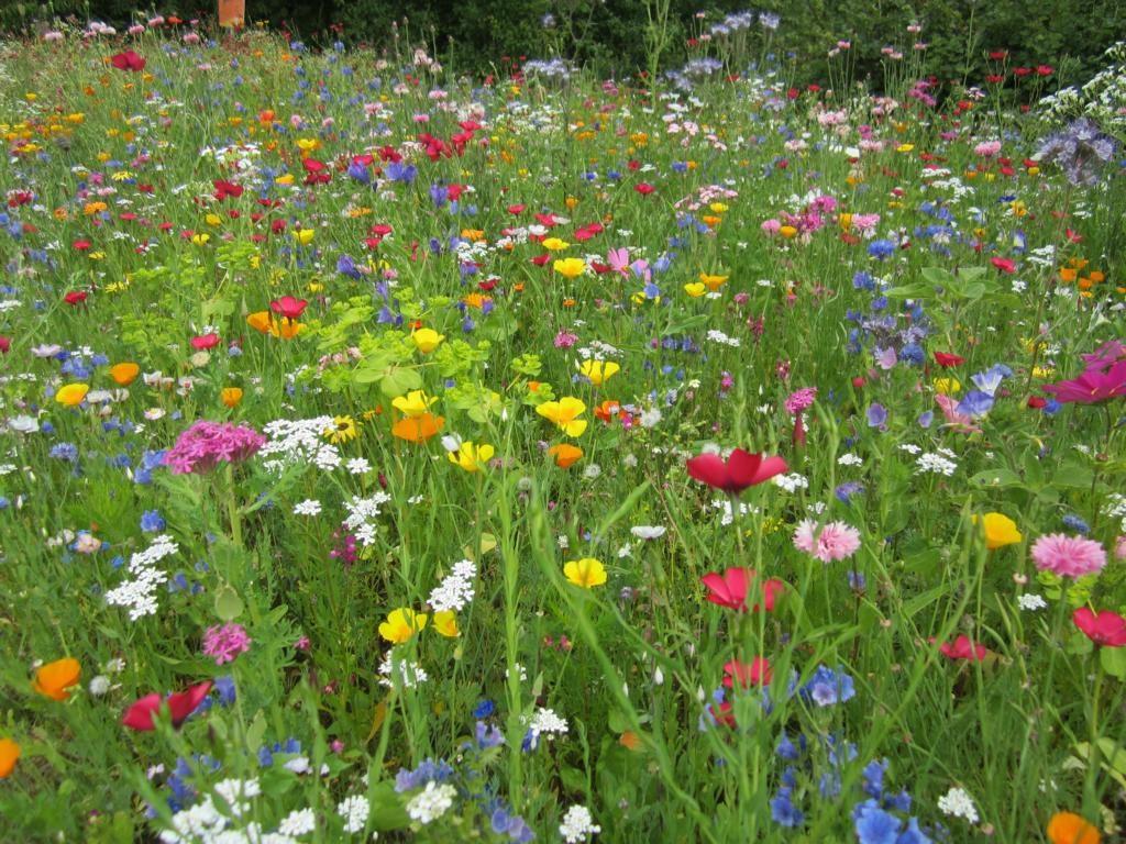 Blumenwiese auf mit Effektiven Mikorroganismen gepflegtem Boden