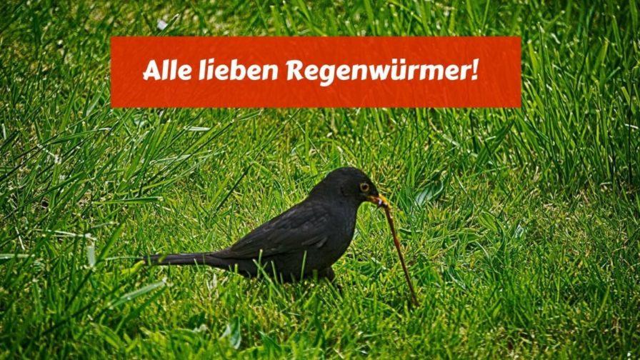 Alle lieben Regenwürmer! (1)