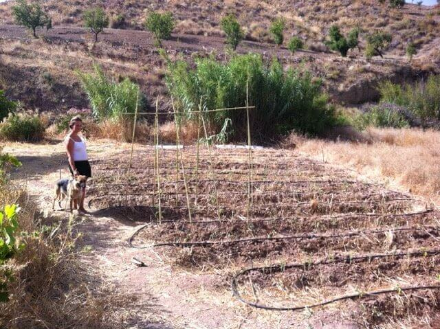 Gemüsebeet in Spanien