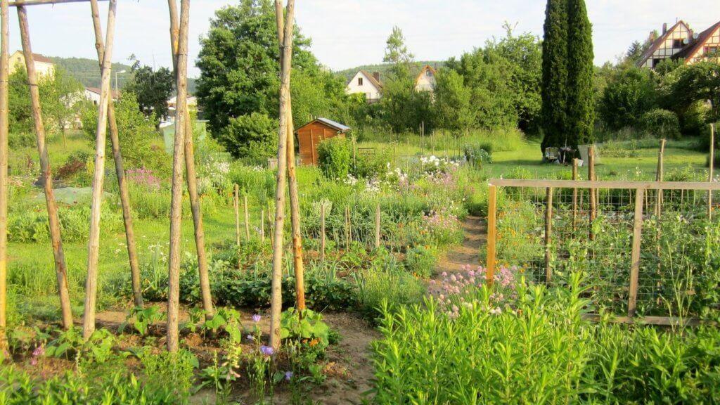Frühsommer im Biogarten