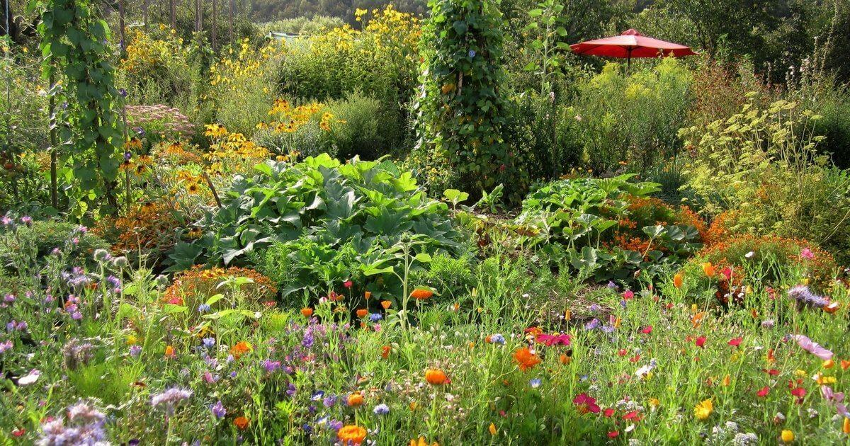 biogarten f llhorn g rtnern mit effektiven mikroorganismen. Black Bedroom Furniture Sets. Home Design Ideas