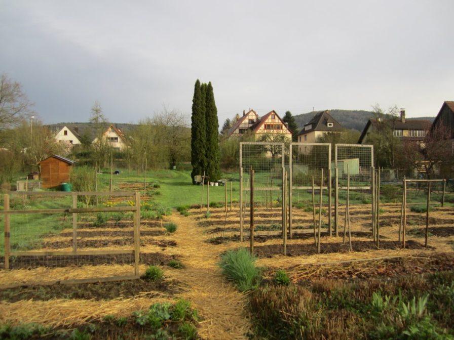 Mit Stroh gemulchte Wege im Biogarten