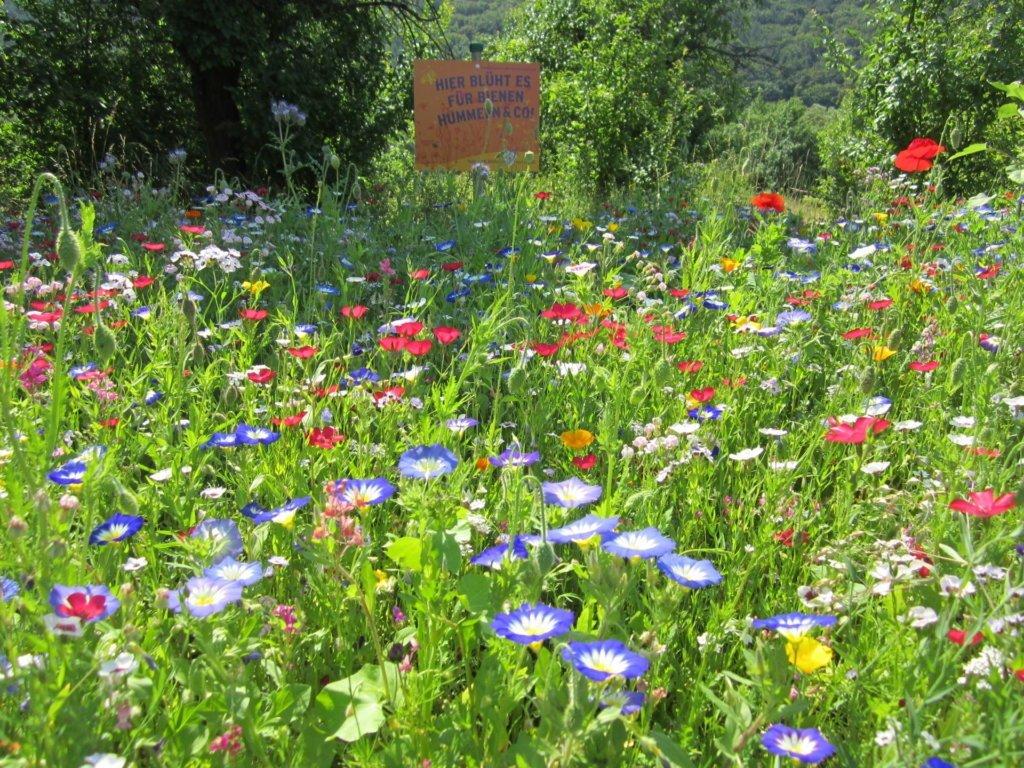 Blumenwiese im Biogarten Füllhorn