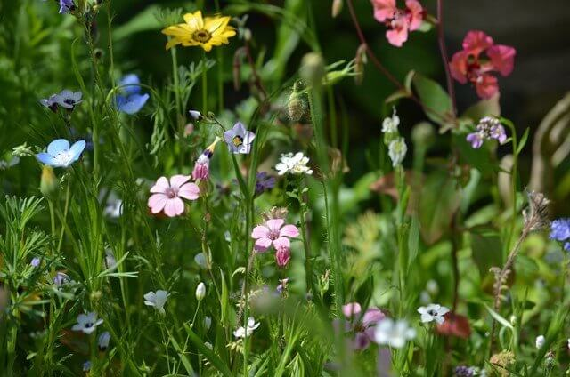 Zarte Blumenschönheiten in einer Blumenwiese