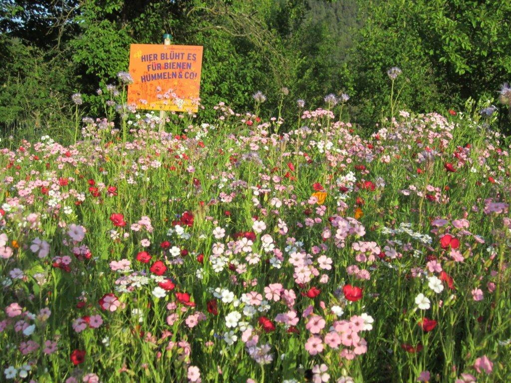 Einjährige Blumenwiese im Biogarten Füllhorn