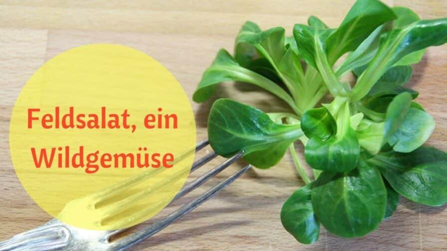 Feldsalat, ein Wildgemüse (2)