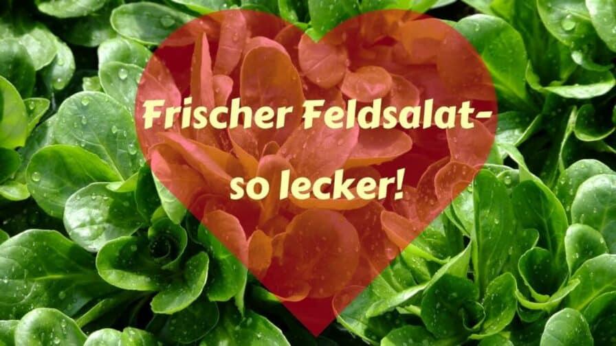 Frischer Feldsalat... (1)