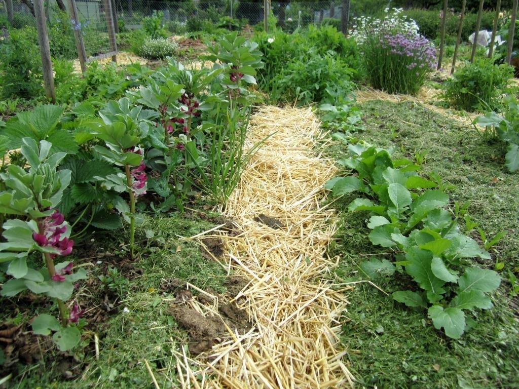 Eine Gartenarbeit im April: Das Mulchen