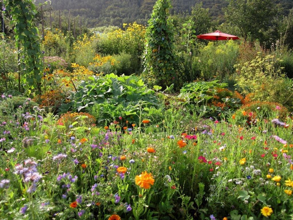 Bunte Vielfalt im Biogarten Füllhorn