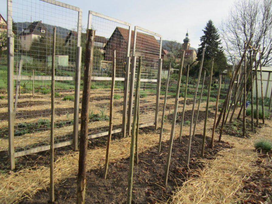 Bohnengestelle und Gurkengestelle im Gemüsegarten