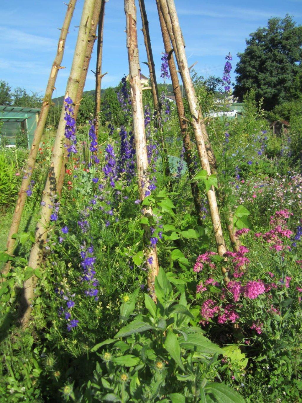 Kleines Bohnentippi mit Sommerblumen