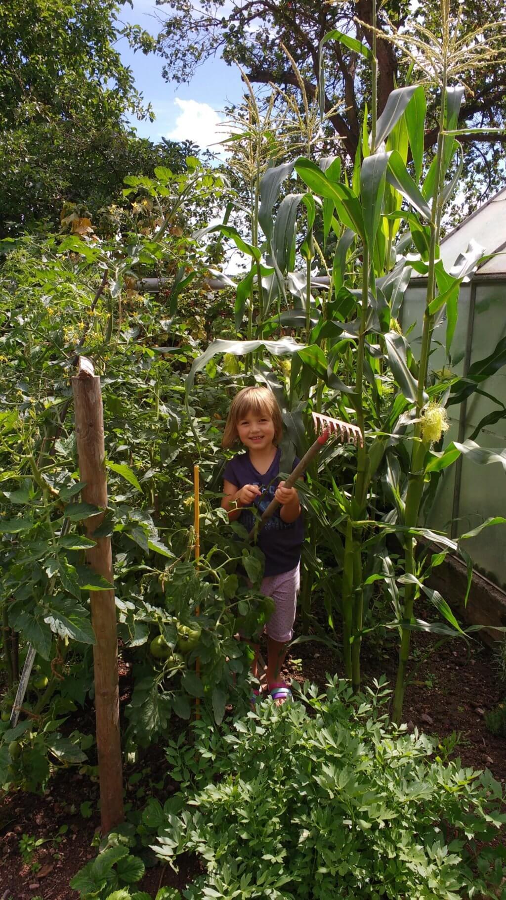 Mädchen zwischen Mais und Tomaten