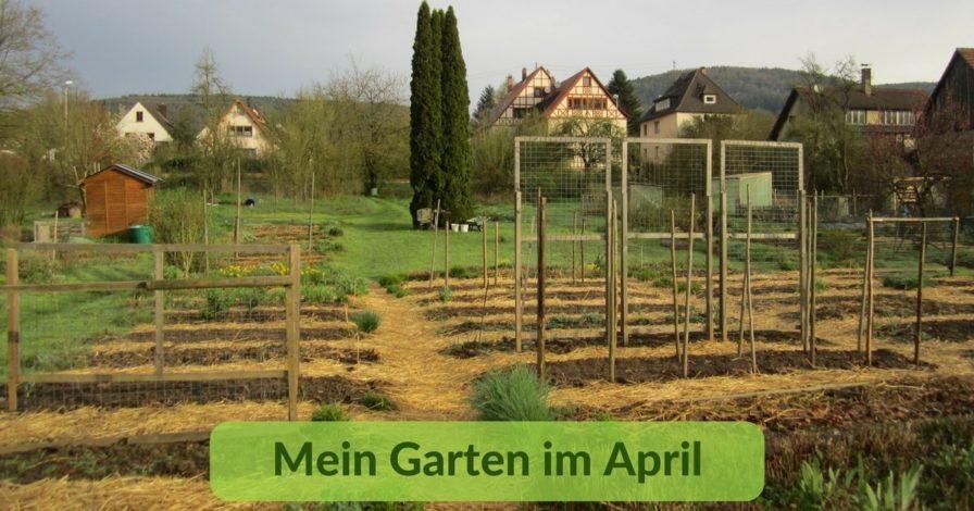 Mein Garten im April (1)
