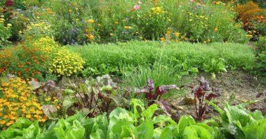 Gesundes Gemüse in Mischkultur