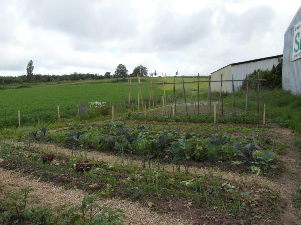Dieser Garten steht auf freiem Feld, gehört Monika und wird auch von Feldhasen geliebt.