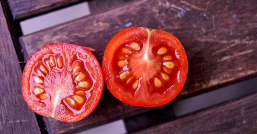 Samen von Tomaten
