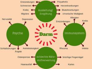 Darmgesundheit durch Effektive Mikroorganismen