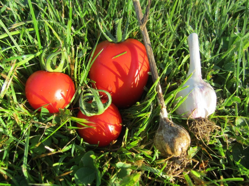 Tomaten und Knoblauch Rundlinge