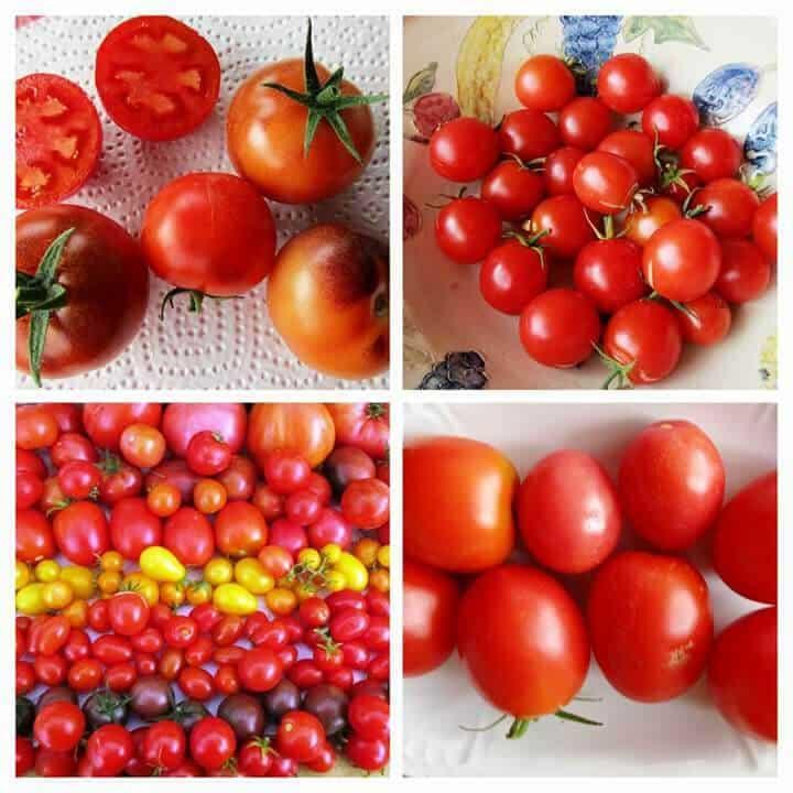 Tomatenvielfalt von Christine Zimmermann