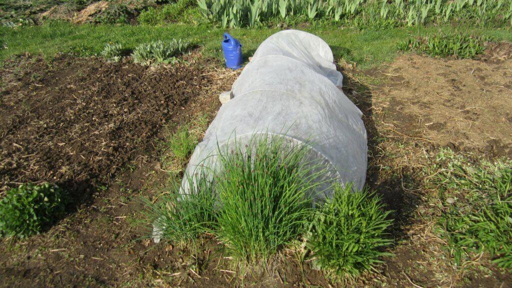 Früher Anbau durch Einsatz von Plastik im Gemüsevlies