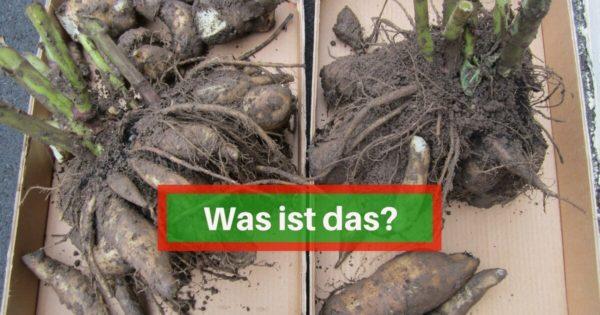 Was ist das- (4)