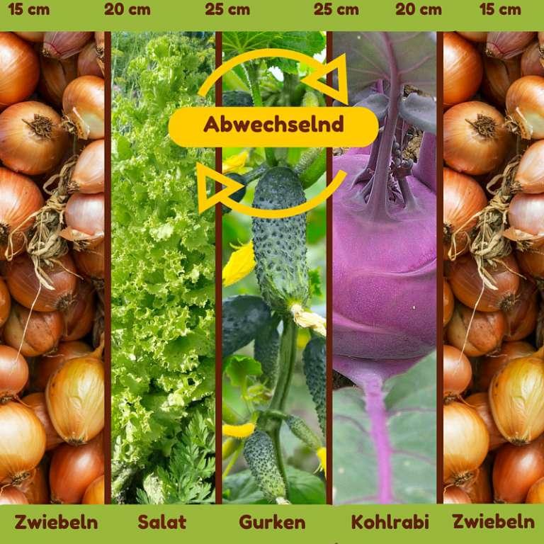 Mischkultur mit Gurken, Salat, Kohlrabi und Zwieblen