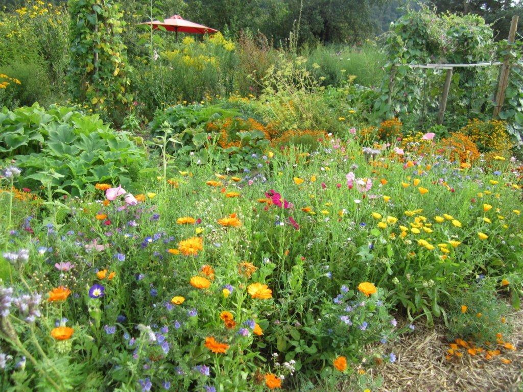 Bauerngartenpracht im Biogarten Füllhorn